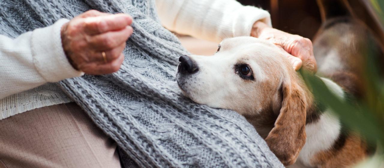 Zooterapia może pomóc osobie chorej na Alzheimera.